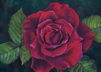 heart-of-the-rose