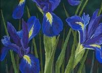dutch-irises-dark-blue-oct2010