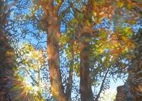 reflected-light