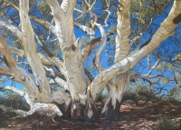 river-red-gum-coopers-creek-gallery