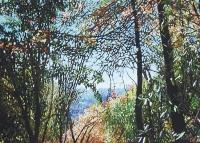 adelaide-hills-autumn