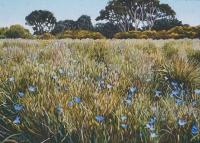 ki-wetland-cropped